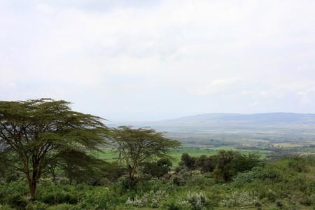 maasai mara: Parco nazionale di Masai Mara in Kenya, Africa Archivio Fotografico