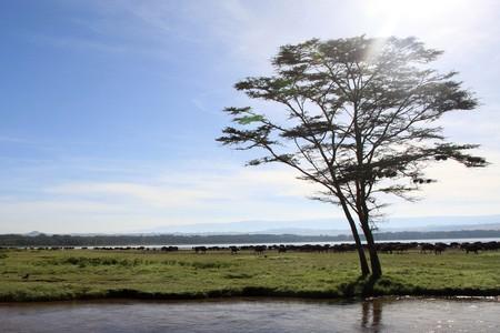 lake nukuru: Lake Nukuru National Park in Kenya, Africa Stock Photo