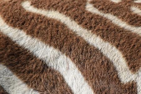 lake nukuru: Zebra Skin Pattern - Lake Nukuru National Park in Kenya, Africa