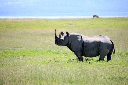 nukuru: Rhino - Lake Nukuru National Park in Kenya, Africa Stock Photo