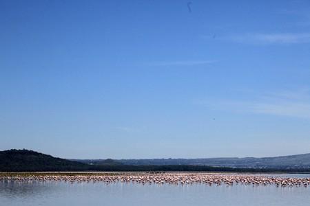 Pink Flamingoes - Lake Nukuru National Park in Kenya, Africa photo