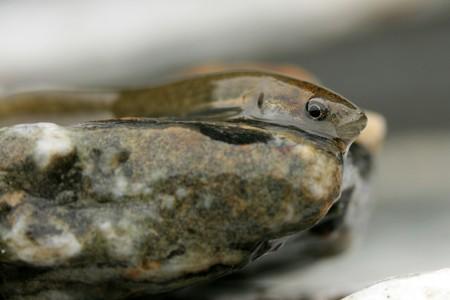 Tiny Fish on a rock photo