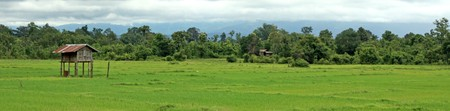 Rice Fields at Bolaven Plateau in Southern Laos photo
