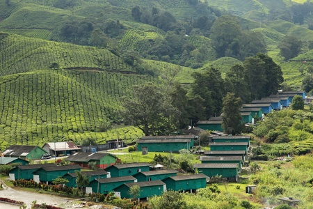 Cameron Highlands Tea Plantations photo