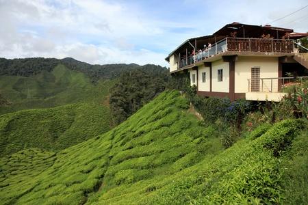 Tea Plantation, Malaysia - Cameron Highlands photo