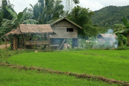 palawan: Rice Fields in The area of El Nido on Palawan Island in Philippines