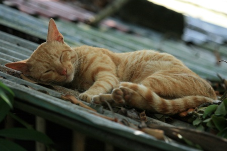 cat island: Cat Sleeping in Puerto Princesa the main town of Palawan Island, Philippines