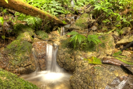 Jungle Waterfall in Cameron Highlands, Malaysia photo