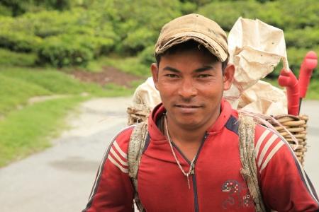 carying: TeaPlantation in Cameron Highlands, Malaysia