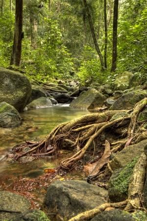 Jungle River photo