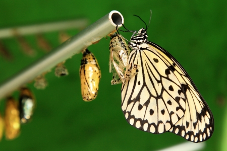 Butterfly Garden in Penang, Malaysia