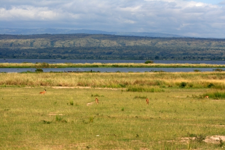 plains: Savannah at Murchison Falls National Park Safari Reserve in Uganda - The Pearl of Africa