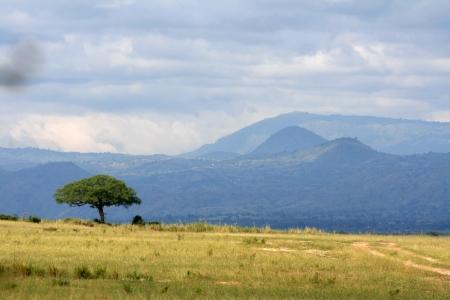 great plains: Savannah at Murchison Falls National Park Safari Reserve in Uganda - The Pearl of Africa