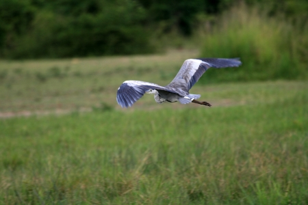 Stork at Murchison Falls National Park Safari Reserve in Uganda - The Pearl of Africa photo