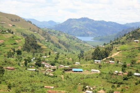 Rice Fields in Kisoro District in Uganda - The Pearl of Africa photo