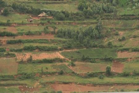 bunyoni: Rice Fields at Lake Bunyoni, Kisori District, Uganda in East Africa
