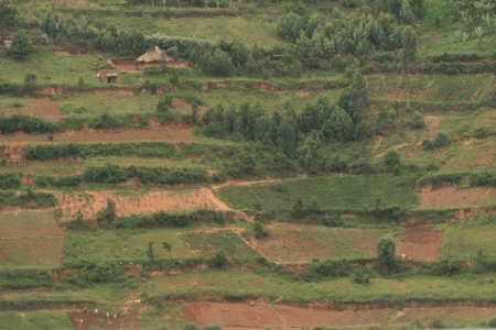 kisoro: Rice Fields at Lake Bunyoni, Kisori District, Uganda in East Africa