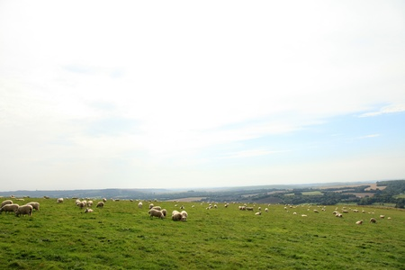 English Countryside at South Downs in Southern UK photo