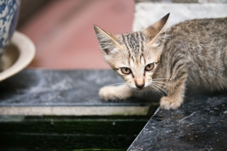 krung: Cute Cat in Bangkok City, Thailand Stock Photo
