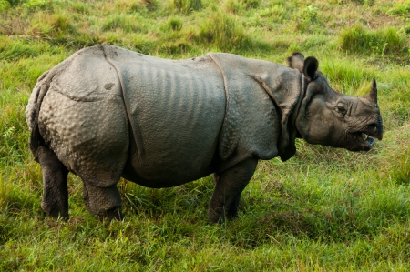 national parks: Indian Rhino - Royal Chitwan National Park in Nepal Stock Photo