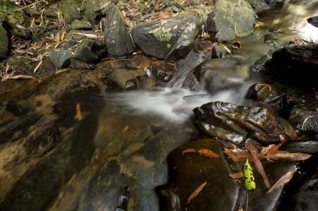Wing Hin Waterfall at Khao Sok National Park, Thailand Stock Photo - 18647493