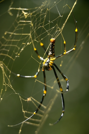 Spider at Khao Sok National Park, Thailand Stock Photo - 18647455