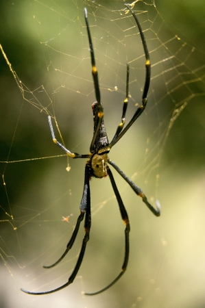 Spider at Khao Sok National Park, Thailand Stock Photo - 18647738