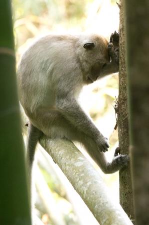 Monkey at Khao Sok National Park, Thailand Stock Photo - 18647414