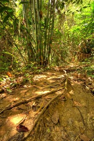 khao: Khao Sok National Park, Thailand