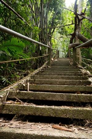 Khao Sok National Park, Thailand Stock Photo - 18647682