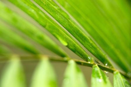 Green Leaf - Khao Sok National Park, Thailand Stock Photo - 18647473