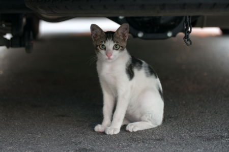 Cat Under Car in Penang City in Malaysia Stock Photo - 19192409