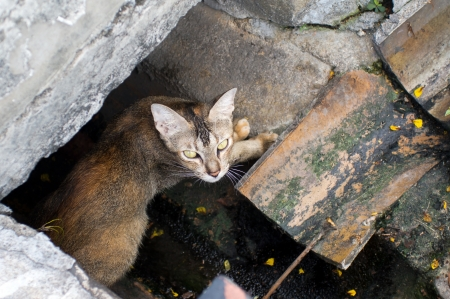 Cat in Penang City in Malaysia Stock Photo - 19192363