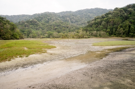 Meromictic Lake in National Park in Penang, Malaysia Stock Photo - 19193657
