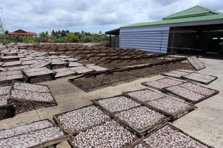 Squid Production in Phetchaburi, Thailand photo