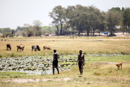 chobe: Chobe River, Chobe National Park, Botswana, Africa