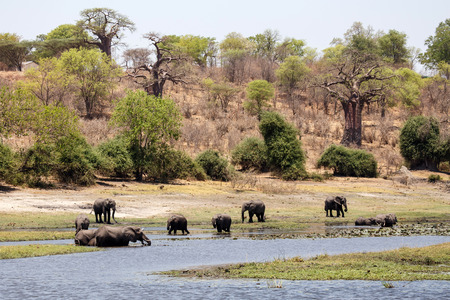 chobe national park: Chobe River, Chobe National Park, Botswana, Africa