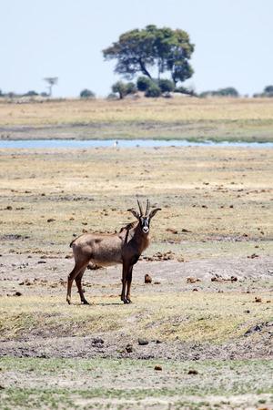 chobe: Chobe National Park, Botswana, Africa Stock Photo