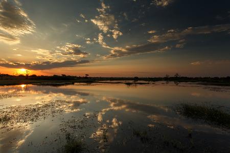 Okavango Delta (Moremi National Park) in Botswana Africa
