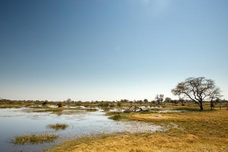 pozo de agua: Okavango Delta (Parque Nacional de Moremi) en Botswana África Foto de archivo