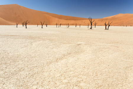 vlei: Dead Vlei - Sossusvlei in the Namib Desert, Namibia, Africa