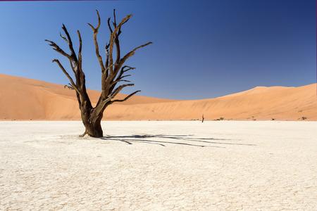 toter baum: Dead Vlei - Sossusvlei in der Namib-Wüste, Namibia, Afrika