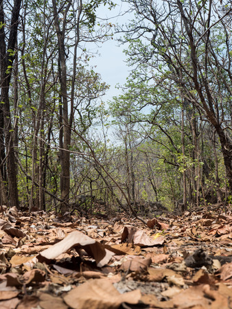 leading: Path Leading Through Ancient Forest - Ob Luang National Park, Thailand