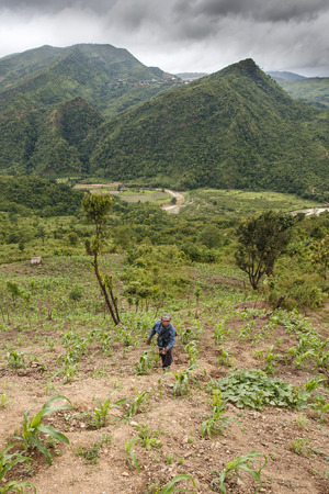 tends: CHIN STATE, MYANMAR - JUNE 22 2015: Farmer tends to crops in the only recently opened for tourists Chin State Mountainous Region, Myanmar (Burma)