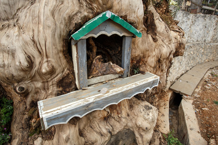 recently: Shrine inside a tree in Falam in the recently opened to foreigners area of Chin State - western Myanmar (Burma)