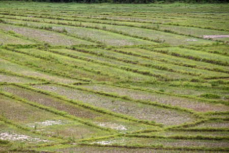 flood area: Scenic Rice Fields at Rhi Lake in Chin State, Myanmar (Burma) Stock Photo