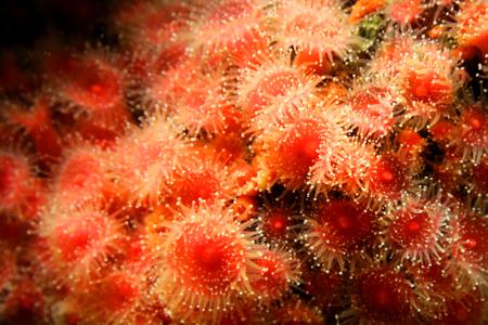 Sea Anemone Reklamní fotografie