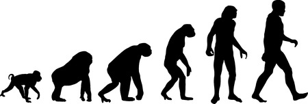 human evolution: Evolution Illustration