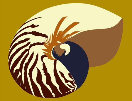 nautilus shell: Nautilus Shell Illustration