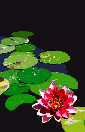 Large red Water Lily with green leafs